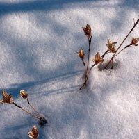 зимние цветы :: Александр Корнелюк