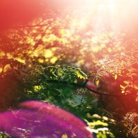 весна,солнце.. :: Taras Oreshnikov