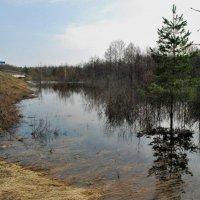 Разлив на реке Серёжа :: Николай Масляев