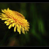 Портрет цветка. :: владимир