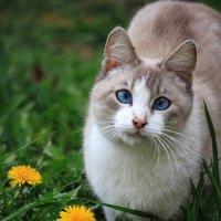 Весенняя котомодель :: Ирина Приходько