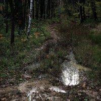 Слякоть и грусть дорог......... :: Валерия  Полещикова