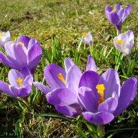 Апрельские радости. :: Лия ☼