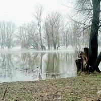 Туман :: Диляра Садриева