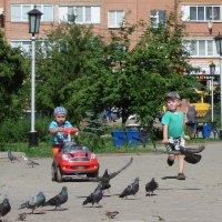 Гоняем голубей :: Михаил Битёв