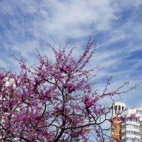 Краски весны :: Анюта Я