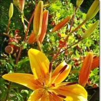Желтая   красотка :: Лидия (naum.lidiya)