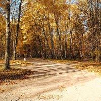 дорога к жёлтым листьям :: Вячеслав Михеев