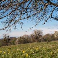 На поляне весной :: Нина Сигаева