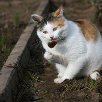 Пожиратель мышей... :: Sergey Apinis