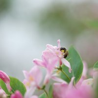 Нежные краски весны :: Balakhnina Irina