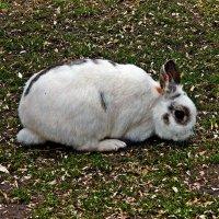 кролик :: Александр Корчемный