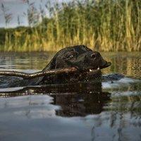 на озере :: Сергей Прозоров