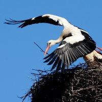 не скучай! :: linnud