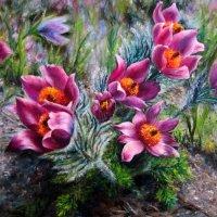 Первоцветы. :: Мила Бовкун