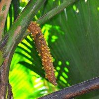мужская пальма :: vg154