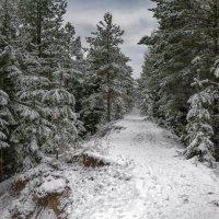 Дорога в сказочный лес (вариант 2) :: Valeriy Piterskiy