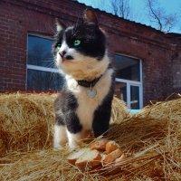 Кот на сене :: Natalia Babukh