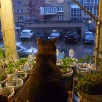 Хоть в окно поглядеть :: Mary Коллар