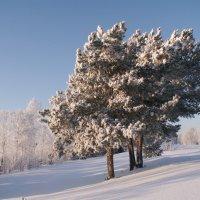 Зима :: Даниил Шинкарёв