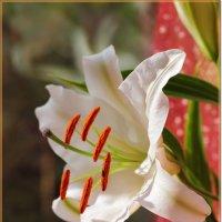 Девственная красота :: Лидия (naum.lidiya)