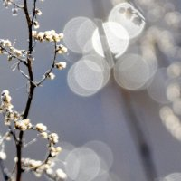 Апрель :: Нина Алексеева