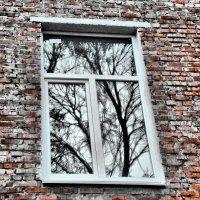 Окно,за которым рождается НОВАЯ ВСЕЛЕННАЯ :: Елена Строганова