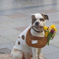 Дамочка с цветами :: M Marikfoto