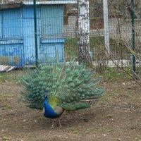 Казанский зоопарк :: Наиля
