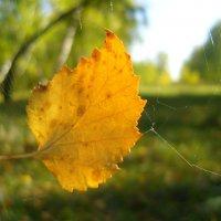 Летящий по ветру листок на паутине замирает. :: галина