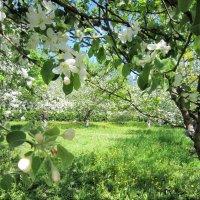 Май в пришкольном саду :: Ольга Алеева