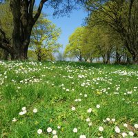 Украшает Весна дом цветочной палитрой, И под нос себе тихо мурлычит мотив... :: Galina Dzubina