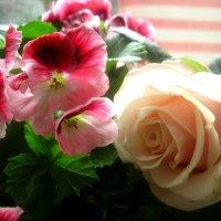 Цветы в моем доме :: Елена Семигина