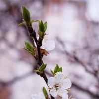 Весна пришла!!! :: Сергей Афанасьев