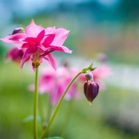 Про цветы :: Michael Averkiev