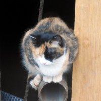 Кошечка :: Наталья Пендюк Пендюк