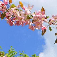 Аромат весны. :: Валентина ツ ღ✿ღ