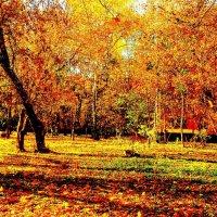 Осень :: Елена Воронкова