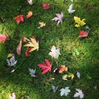 Autumn :: Зоя Былинович