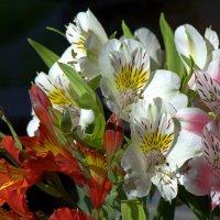 Цветы для любимой :: Александр Грищенко