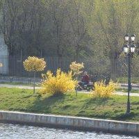 Весна золотая :: Евгения Чередниченко