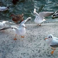 Где живут чайки?! :: Наталья