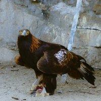 Я орел! :: cfysx