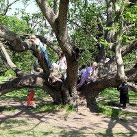 удобное дерево :: Николай Овечко