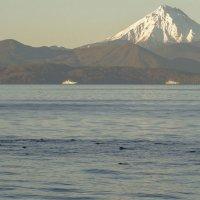 Просто стая тюленей на фоне вулкана! :: Ser Gun ...