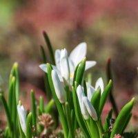 Весенние цветы :: Nadia Brusnikova