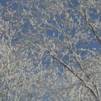 Снежное утро :: Надежда Малинкина