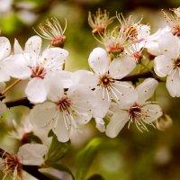 Весна :: Юлия Горбатенко