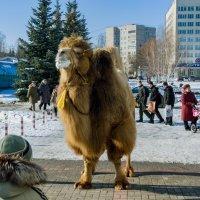 Курчатов - родина верблюдов :: Александр Лихачёв