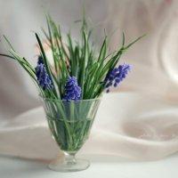 Нежный апрель :: Вера Шамраева